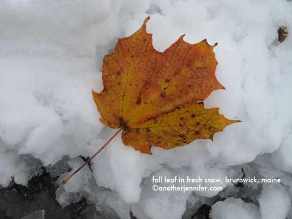 fallen leaf in fresh snow