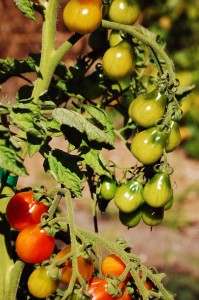 Philanthropy Friday: Ending Hunger, One Garden at a Time