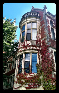 Wordless Wednesday: Changing Leaves, Bowdoin College