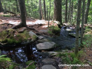 Wordless Wednesday: The Natural Path