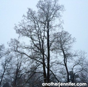 Wordless Wednesday: Eery Winter Afternoon
